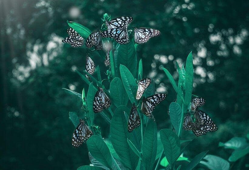 Butterflies arround
