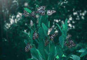 Butterflies arround